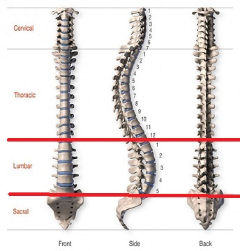 anatomy-of-the-spine-blog